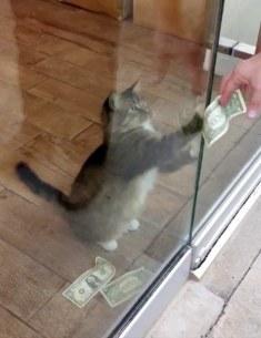 catnew